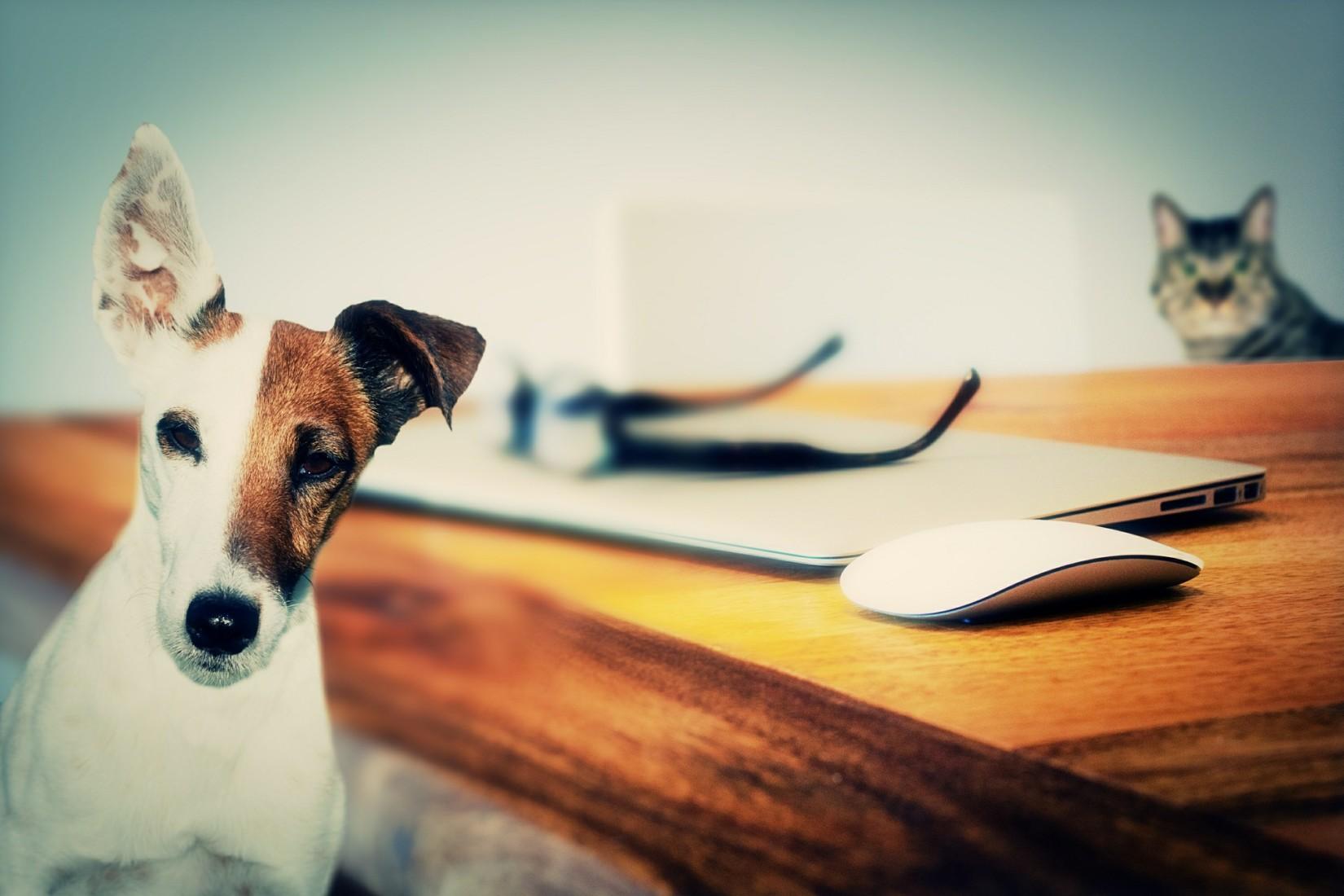 gadgets-para-mascotas